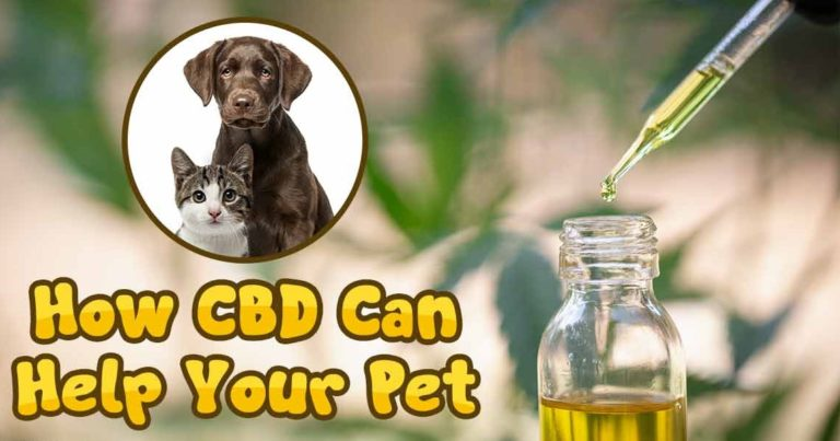 Can CBD Oil Actually Help Your Pet?