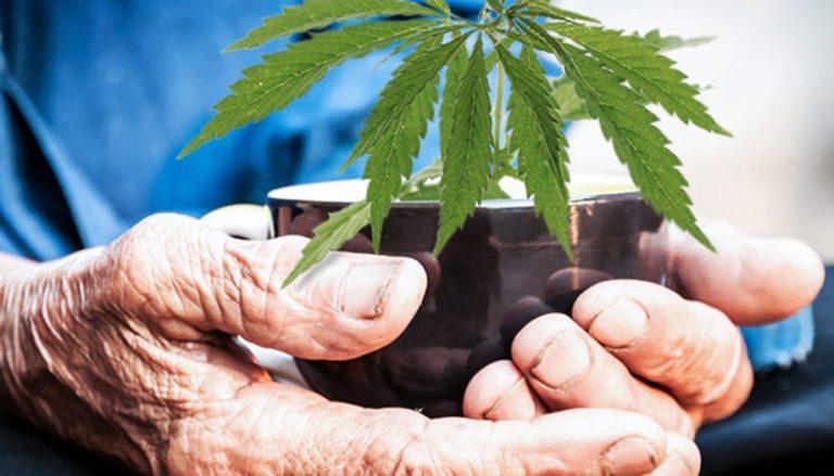 Marijuana for Elders