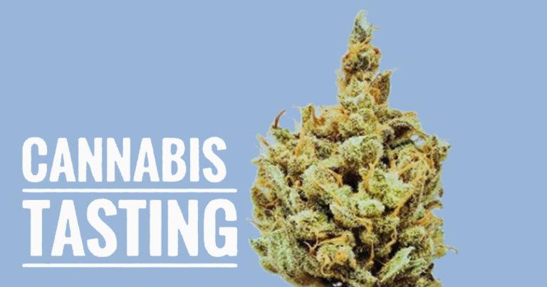 Cannabis Tasting