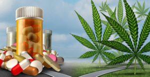 Cannabis VS Opioids