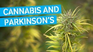 Can Marijuana Treat Symptoms of Parkinson's Disease?
